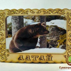 "Магнит фото кедровый ""Медведь 5"""