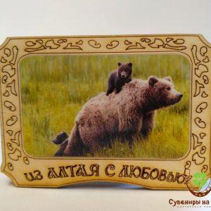 "Магнит фото кедровый ""Медведь 9"""
